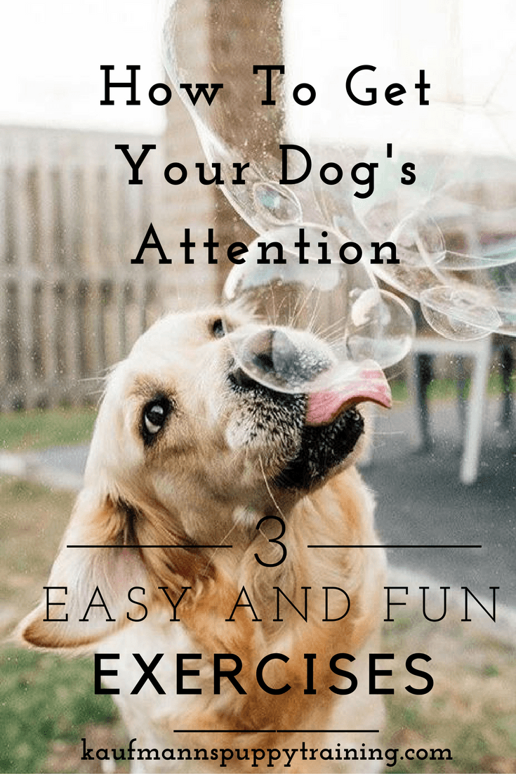 how-to-get-your-dogs-attention-pinterest