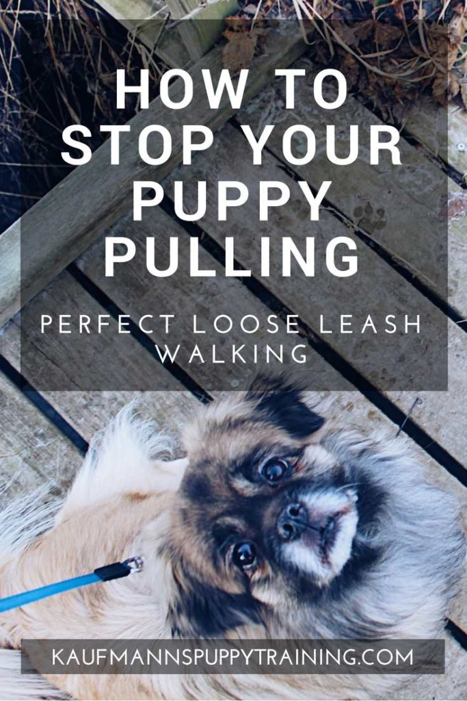 How to Stop Your Puppy Pulling – Learn how to train your dog to walk nicely on a loose leash so you don't get dragged across town on dog walks. Read more about dog training at kaufmannspuppytraining.com