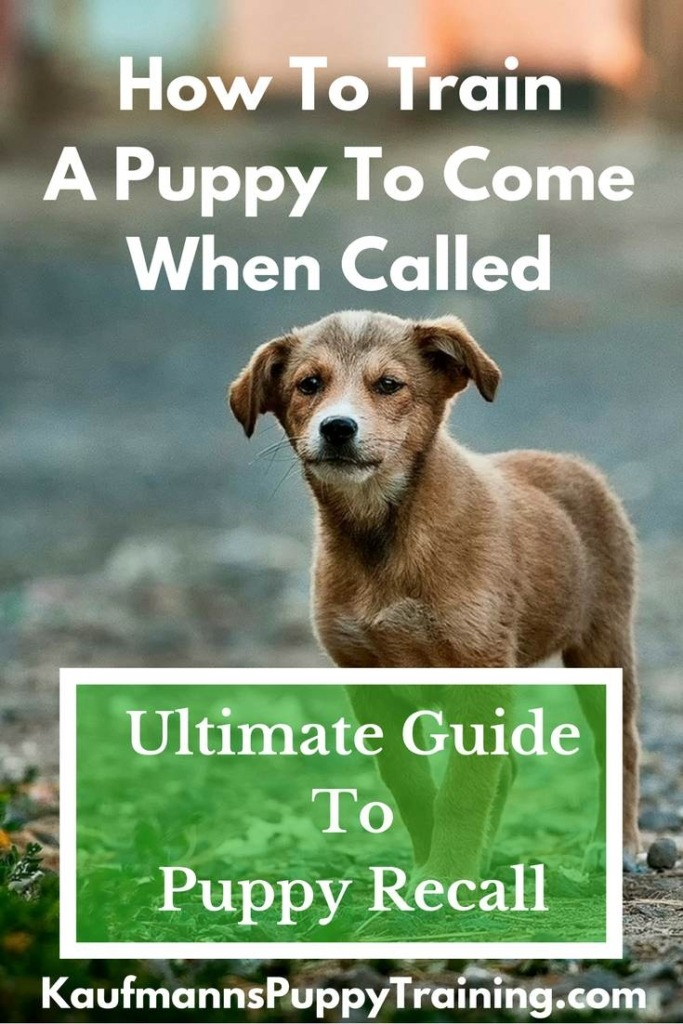 How To Train a Puppy To Come When Called: The Ultimate Guide To Puppy Recall - Read more at kaufmannspuppytraining.com @KaufmannsPuppy