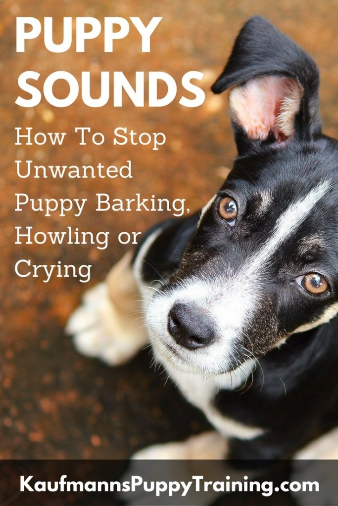 Puppy Sounds – How To Stop Unwanted Puppy Barking, Howling or Crying. Read at kaufmannspuppytraining.com