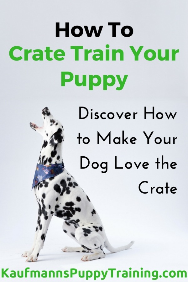 How to Crate Train Your Puppy: Discover How to Make Your Dog Love the Crate - You may already crate your puppy, or you might be absolutely sure you never will. Some people find it terrible to crate their best friend, but you don't have to pity the puppy - you are doing her a favour. Read how at kaufmannspuppytraining.com #puppytraining #dogtraining #cratetraining #puppycratetraining
