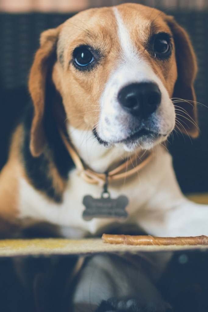 How to Crate Train Your Puppy: Discover How to Make Your Dog Love the Crate